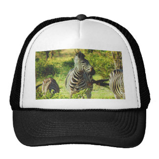 africa zebras enjoy peace, fresh and green trucker hat