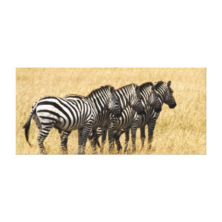 Africa - Zebras of acres tons of Fourth Gallery Wrapped Canvas