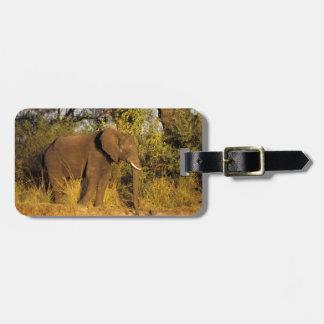 África, Zimbabwe, parque nacional de las cataratas Etiquetas Maletas