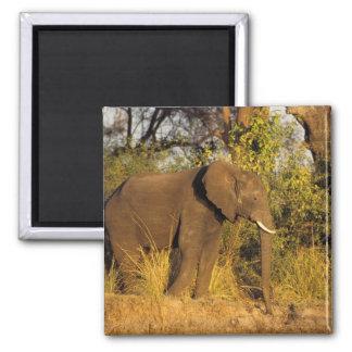 África, Zimbabwe, parque nacional de las cataratas Imán Cuadrado