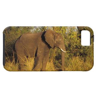 África, Zimbabwe, parque nacional de las cataratas iPhone 5 Carcasa