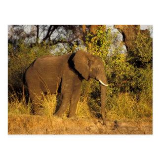 África, Zimbabwe, parque nacional de las cataratas Postales