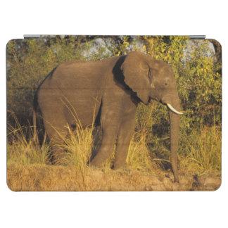 Africa, Zimbabwe, Victoria Falls National Park. iPad Air Cover