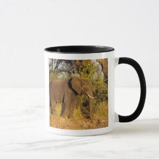 Africa, Zimbabwe, Victoria Falls National Park. Mug