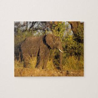 Africa, Zimbabwe, Victoria Falls National Park. Puzzles