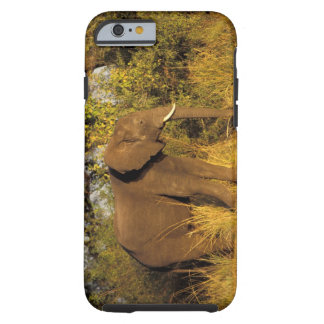 Africa, Zimbabwe, Victoria Falls National Park. Tough iPhone 6 Case