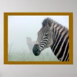 African Animals Zebra Stripes In The Mist Print