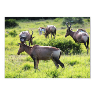 African Antelope on Safari in South Africa Card