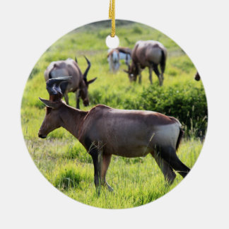 African Antelope on Safari in South Africa Christmas Ornaments