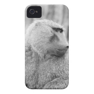 African baboon Case-Mate iPhone 4 cases