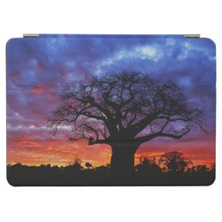 African baobab tree Adansonia digitata 2 iPad Air Cover