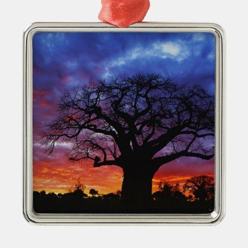 African baobab tree, Adansonia digitata, 2 Metal Ornament | Zazzle