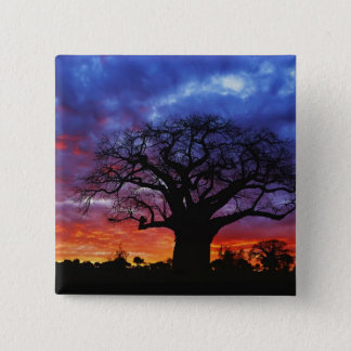 African baobab tree, Adansonia digitata, 2 Pinback Button