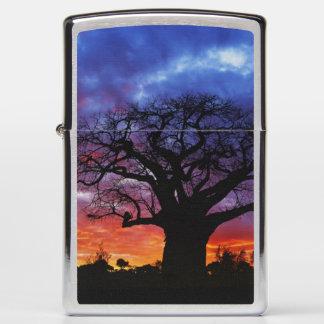 African baobab tree, Adansonia digitata, 2 Zippo Lighter