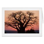 African Baobab Tree Greeting Cards