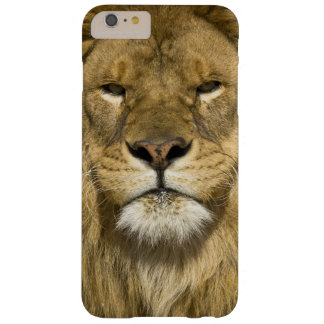 African Barbary Lion, Panthera leo leo, one of Barely There iPhone 6 Plus Case