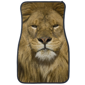 African Barbary Lion, Panthera leo leo, one of Car Mat