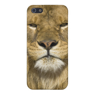 African Barbary Lion, Panthera leo leo, one of Case For iPhone SE/5/5s