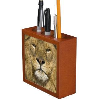 African Barbary Lion, Panthera leo leo, one of Desk Organizer
