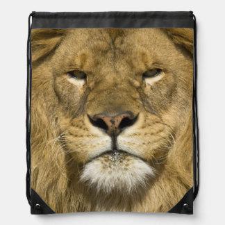 African Barbary Lion, Panthera leo leo, one of Drawstring Bag
