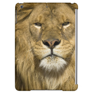African Barbary Lion, Panthera leo leo, one of iPad Air Covers