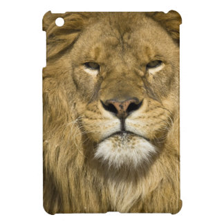 African Barbary Lion, Panthera leo leo, one of iPad Mini Cases