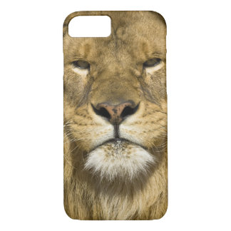 African Barbary Lion, Panthera leo leo, one of iPhone 8/7 Case