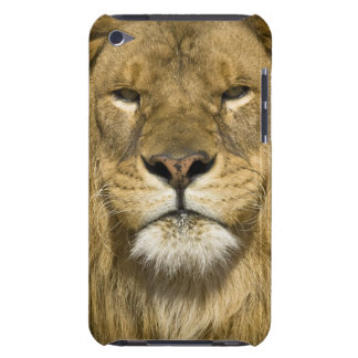 African Barbary Lion, Panthera leo leo, one of iPod Case-Mate Case