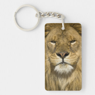 African Barbary Lion, Panthera leo leo, one of Keychain