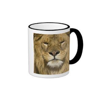 African Barbary Lion, Panthera leo leo, one of Ringer Coffee Mug