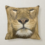 African Barbary Lion, Panthera leo leo, one of Pillow
