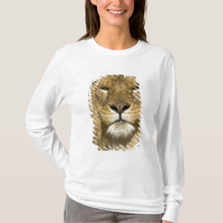 African Barbary Lion, Panthera leo leo, one of T-Shirt