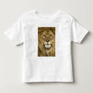 African Barbary Lion, Panthera leo leo, one of Toddler T-shirt