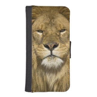 African Barbary Lion, Panthera leo leo, one of Wallet Phone Case For iPhone SE/5/5s