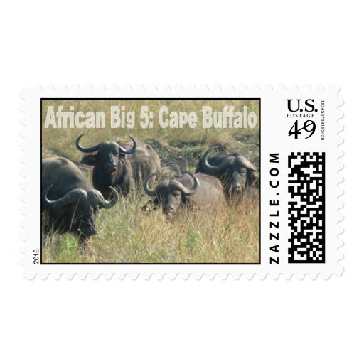 African Big Five: Cape Buffalo Postage Stamp
