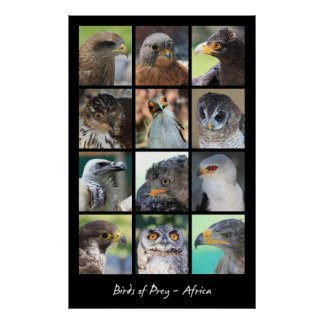 African Birds of Prey Poster