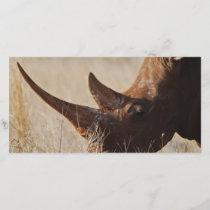 African black rhino with big horns