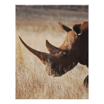 African black rhino with big horns flyer