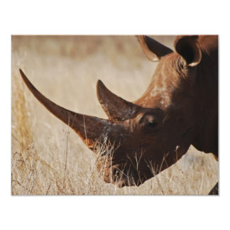 African black rhino with big horns 4.25x5.5 paper invitation card