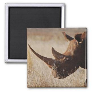 African black rhino with big horns fridge magnet