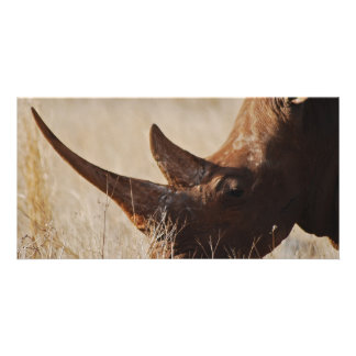 African black rhino with big horns photo card