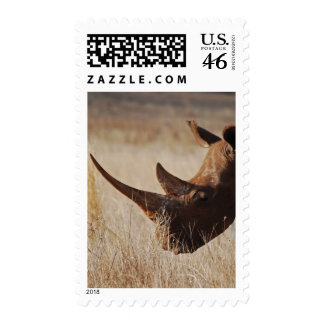African black rhino with big horns postage