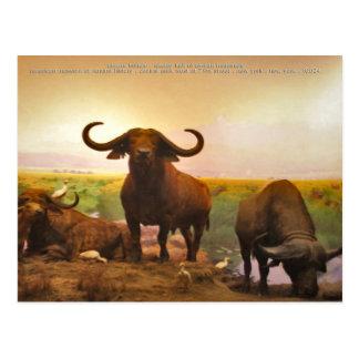 african buffalo postcard