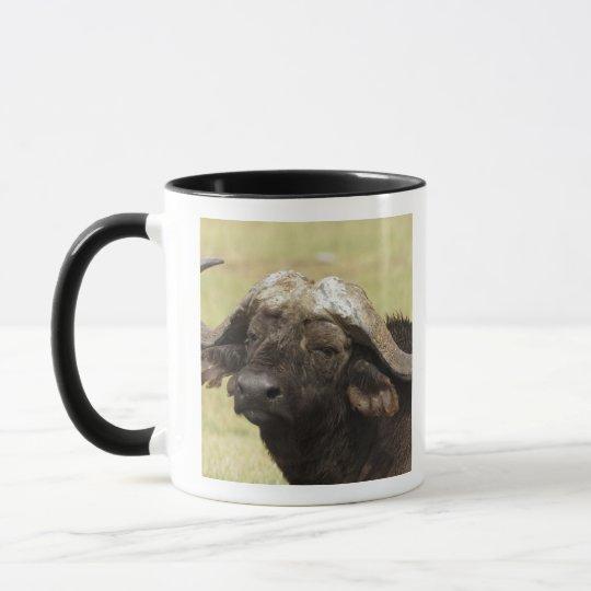 African Buffalo, Syncerus caffer, standing in Mug
