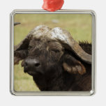 African Buffalo, Syncerus caffer, standing in Square Metal Christmas Ornament