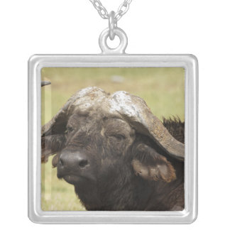 African Buffalo, Syncerus caffer, standing in Silver Plated Necklace