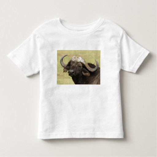 African Buffalo, Syncerus caffer, standing in Tshirts