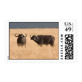 African Buffaloes Postage Stamps
