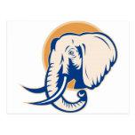 african bull elephant  head post card