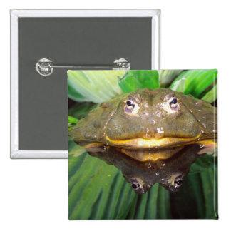 African Burrowing Bullfrog, Pyxicephalus 2 Button